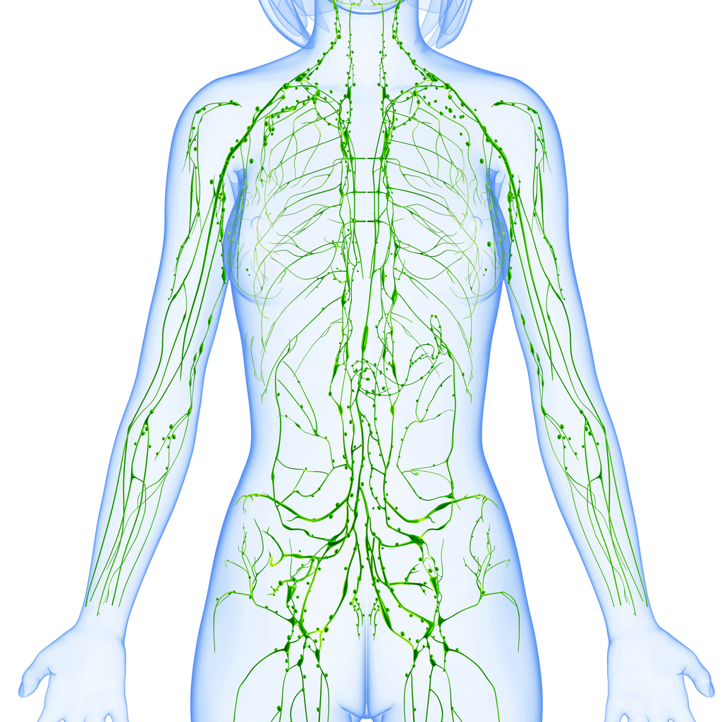 how does the lymphatic system work female lymph nodes